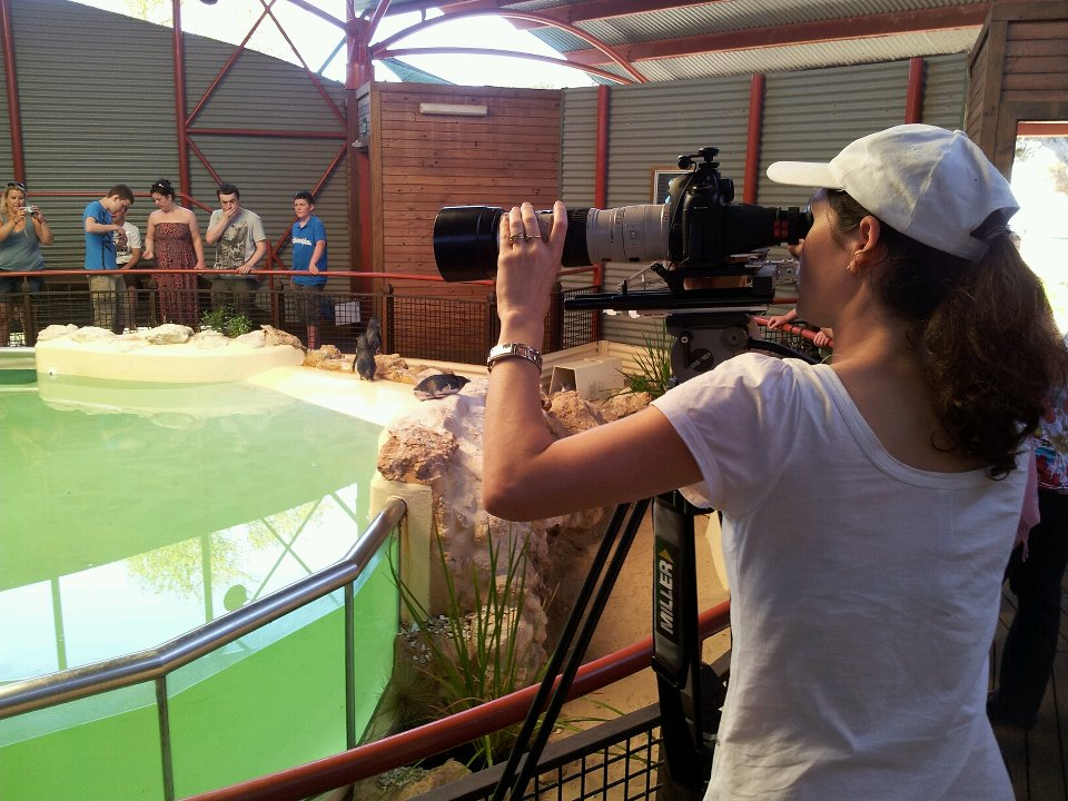 Filming the penguins at Penguin Island, Western Australia